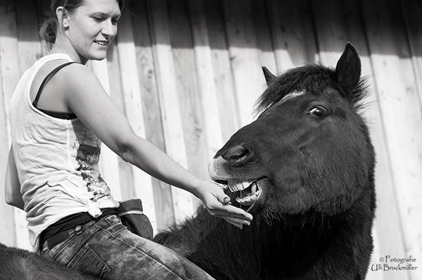 Eigenschaften Pferd, gute und schlechte Eigenschaften