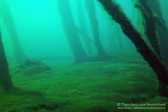 Unterwasserwald, Tauchen in Frose, Tauchen in Sachsen-Anhalt