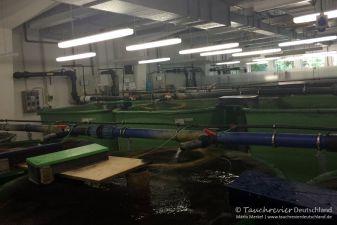Aquakultur, Leibnitz-Institut für Gewässerokologie und Binnenfischerei