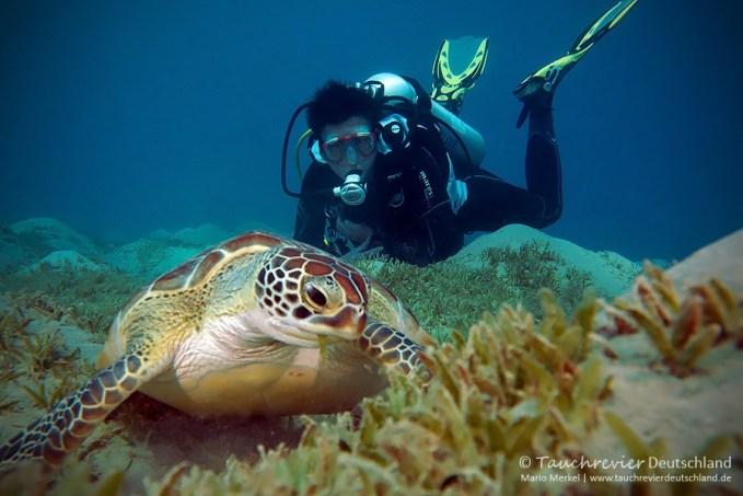 Schildkröte, ORCA Dive Club Safaga, Tauchen in Safaga, Tauchen in Ägypten