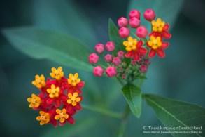Blume, Flora und Fauna in Mexico, Tauchen Cenoten