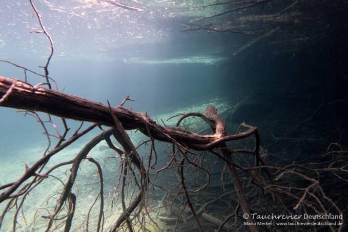 Alter Baum, Tauchen im Samaranger See, Tauchen in den Fernsteinseen
