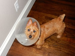 Small Of Cone Of Shame