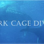 Shark Cage Diving Extreme Team Building Events in Cape Town