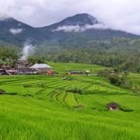 Cycling di Bali - Baturiti to Jati Luwih Trip