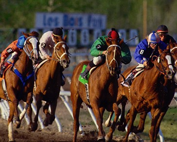 belmont-stakes-odds-horse-racing