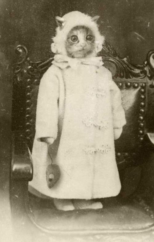 weird-Vintage-photos-cat-portrait