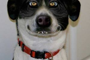 Funny Pictures ~ dog smirk smile crosseyed