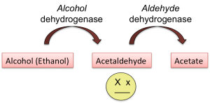 Alcohol metabolism asian glow