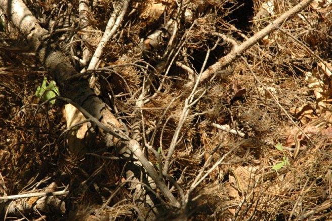 Snake Camouflage