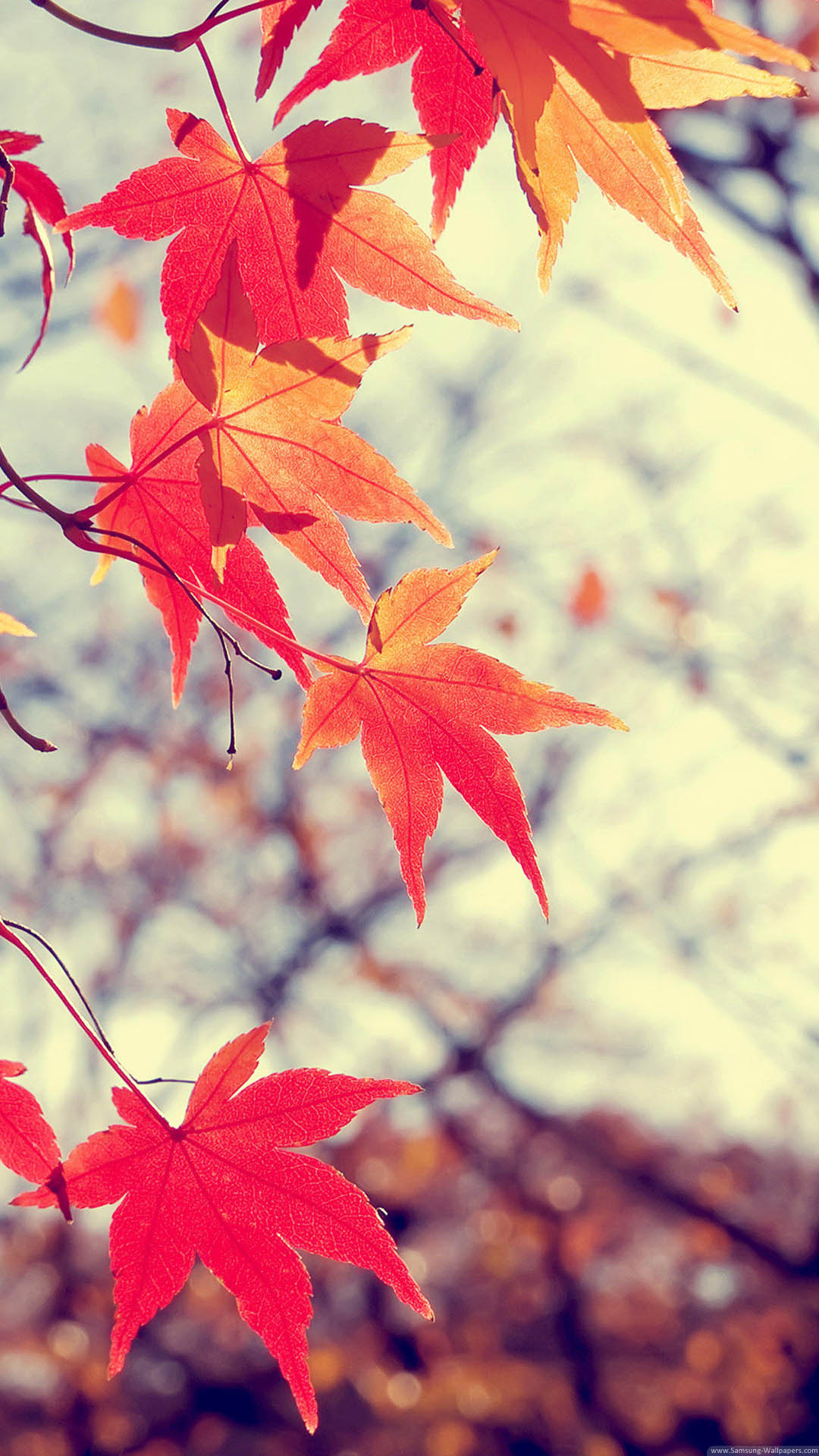 Free Animated Fall Desktop Wallpaper 71 Hd Samsung Wallpapers For Free Download