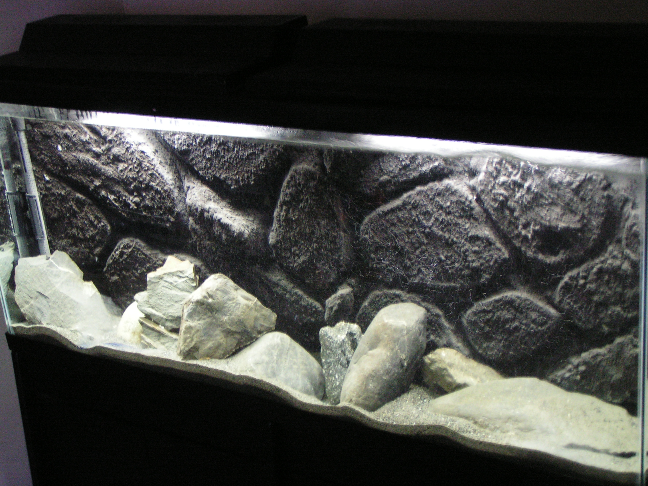 3d Wallpaper Fish Aquarium 33 Attractive Aquarium Background Technosamrat