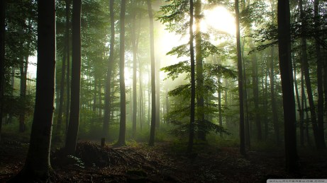 HD wallpapers for Windows 8-coniferous_forest