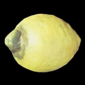 Araña en limon Verna - Destrio