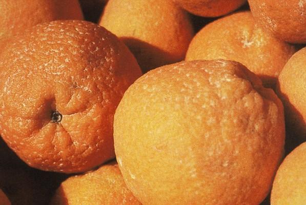 Daños de almacen en citricos