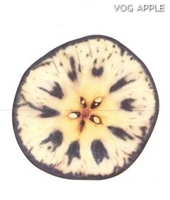Test almidon fruta pepita tipo Lainburg estado 06