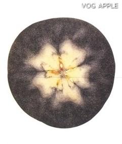 Test almidon fruta pepita tipo Lainburg estado 03