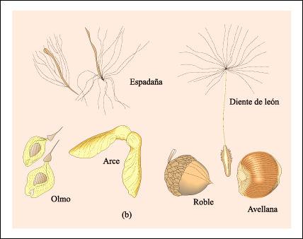 Frutos indehiscentes