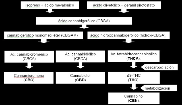 Biosintesis de cannabis sativa