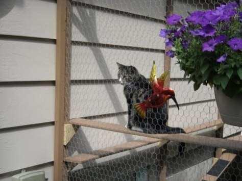 cat enclosure 001