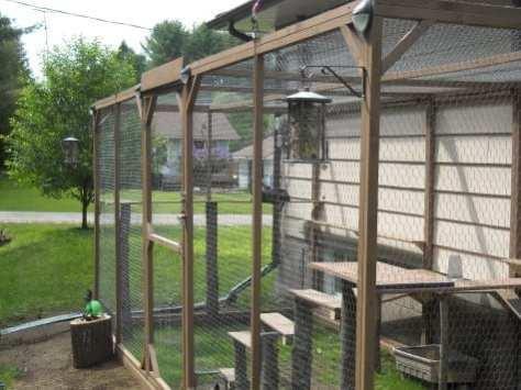 cat enclosure 005