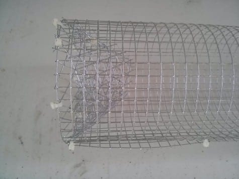 how to make a crawfish trap out of chicken wire