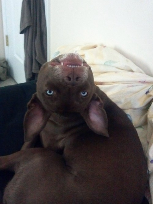 Medium Of Funny Looking Dogs