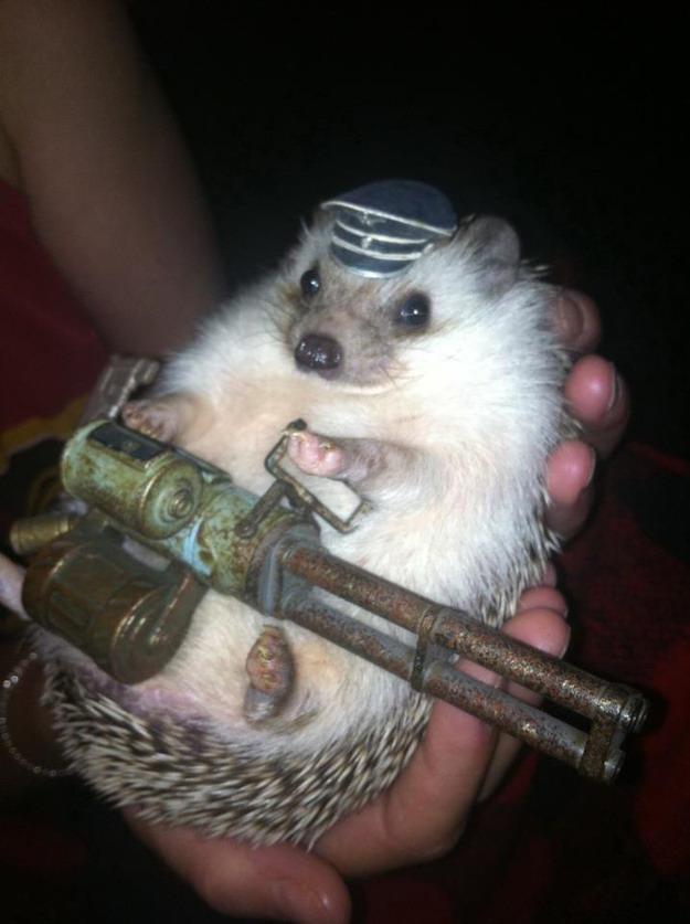 Cute Baby Hedgehog Wallpaper Machine Gun Hedgehog Teh Cute