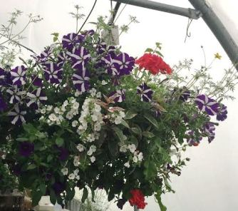 Hanging Basket 5417