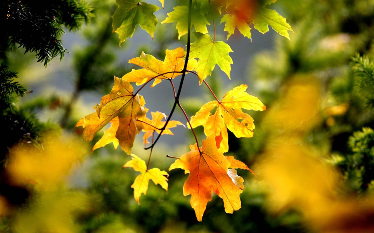 Money Falling Wallpaper The Best Trees For Autumn Colour The Telegraph