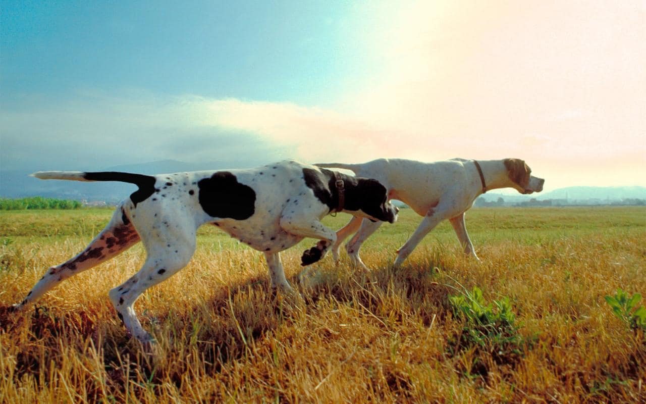 Cars Wallpaper App Dog Breed Characteristics Help To Explain Behaviour