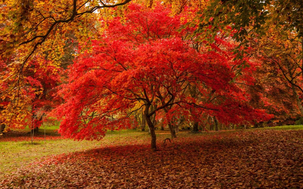 Free Fall Christian Desktop Wallpaper Your Favourite Places For Leaf Peeping In Britain