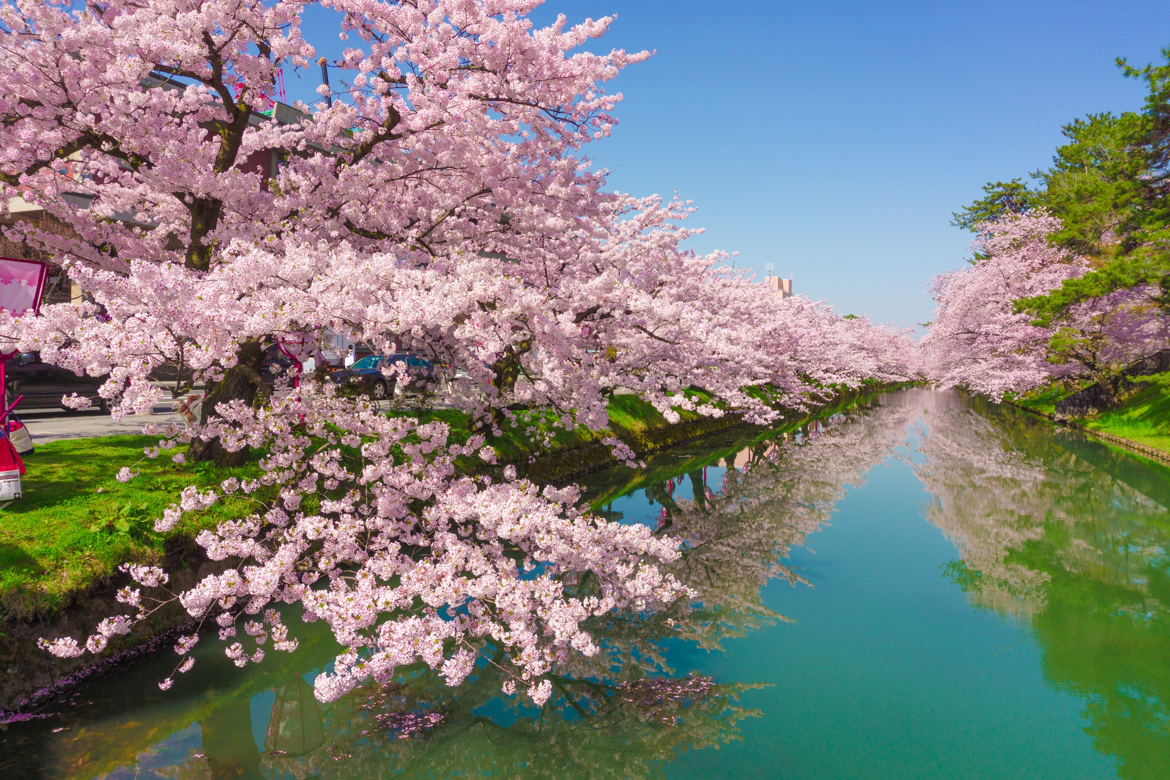 Serene Wallpapers Large Fall Cherry Blossom In Japan Everything You Need To Know To