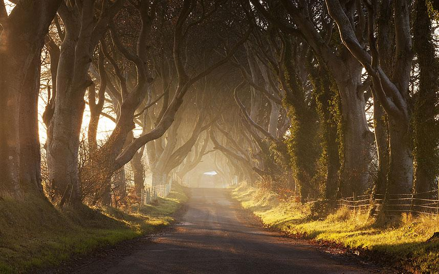 Fall Wooded Wallpaper Northern Ireland S Best Scenic Drives Telegraph