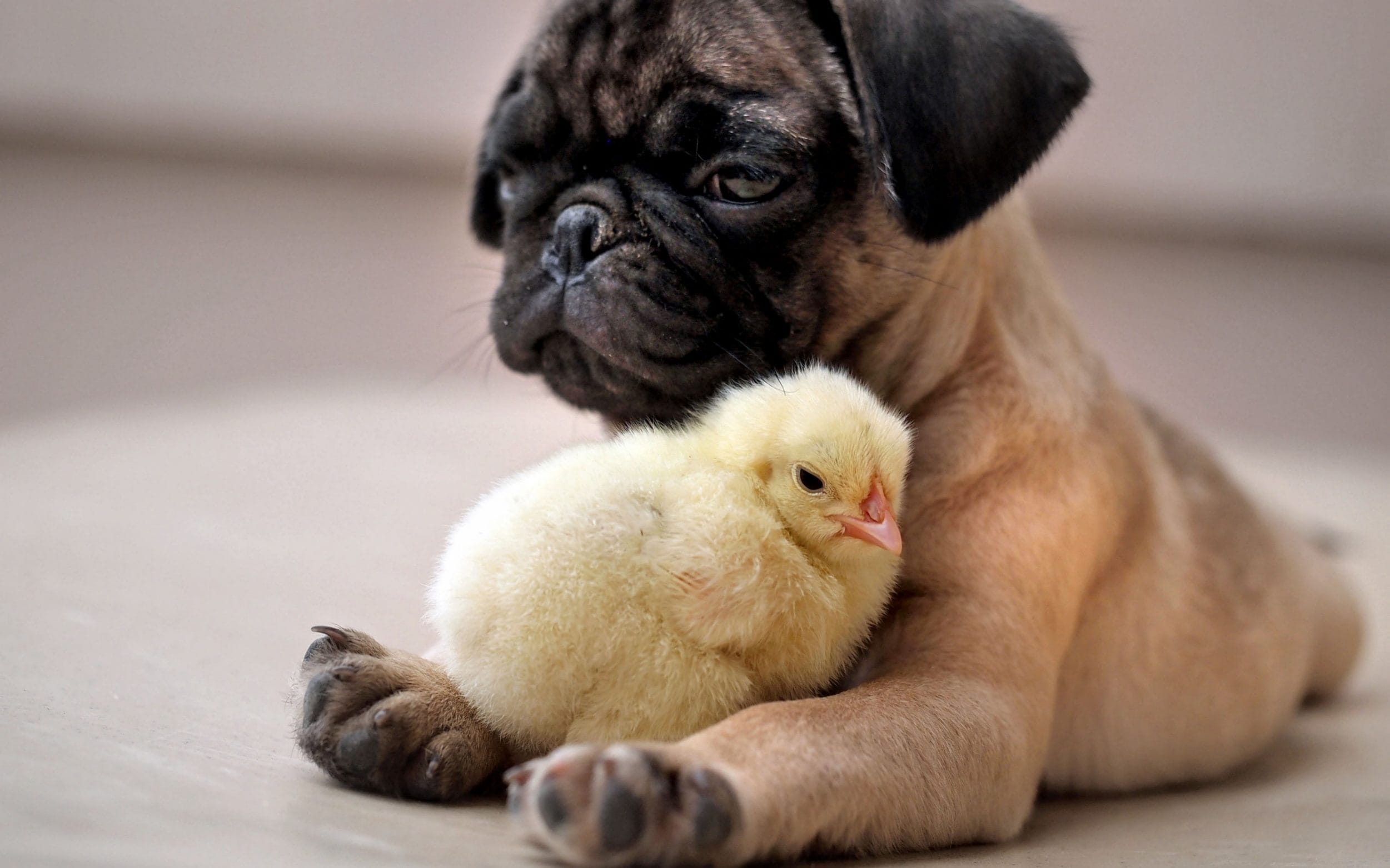 Cute Baby And Baba Wallpaper Unlikely Friendships In The Animal Kingdom In Pictures News