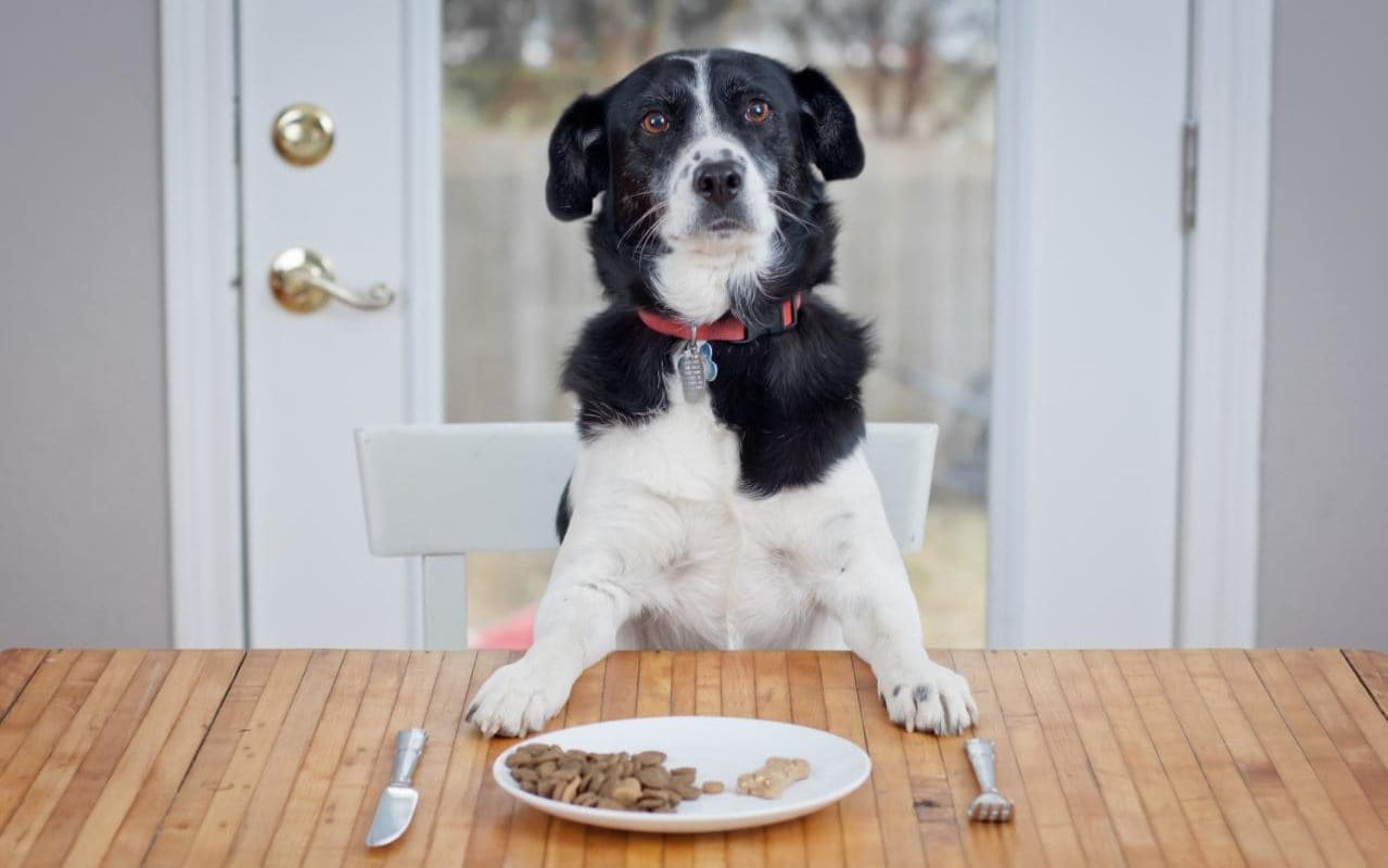 Comfortable Beans Can Dogs Eat Rice Pudding Why Do Dogs Get Upset Stomachs Common Causes Treatments Can Dogs Eat Rice bark post Can Dogs Eat Rice