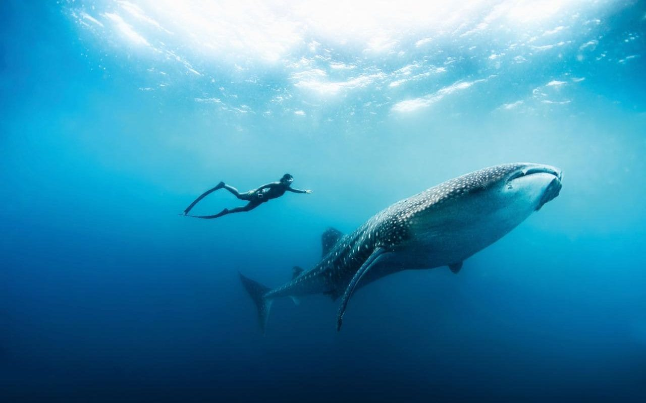Cars Wallpaper Hd Wallpaper What Appealed To Me About Freediving Was The Meditative
