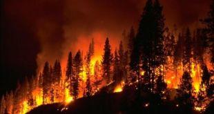 Decretato stato di grave pericolosità per incendi boschivi in Liguria