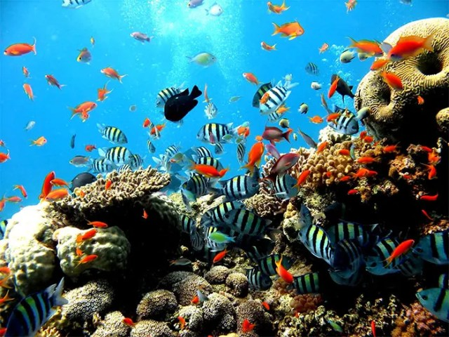50  Best Aquarium Backgrounds to Download & Print   Free & Premium