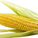 cuisson maïs, temps de cuisson maïs, cuisson maïs a la vapeur, cuisson maïs au four, cuisson maïs a l'eau