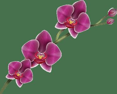 Orchid Stickers Satu Sticker