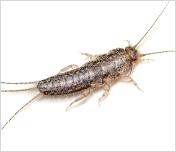 Termite & Pest Control service