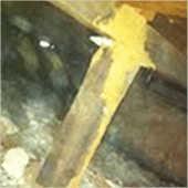 Photo shows termites workings on timber piers going to subfloor bearers.
