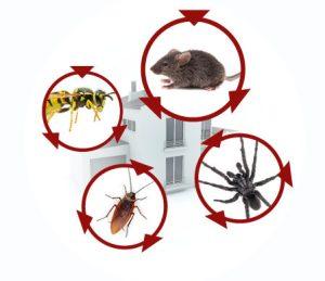 Termigon Pest Control Services