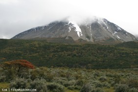 Steppe, trees, mountains and low hanging clouds
