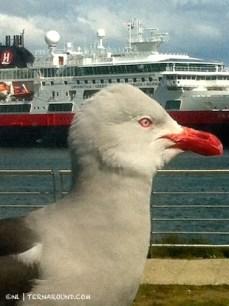 Bird on board