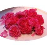 Mon amie la rose : Elixir de rose,macérât, vinaigre, teinture, miel rosat …