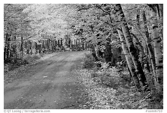 Michigan Fall Colors Wallpaper Black And White Picture Photo Rural Road With Fall Colors