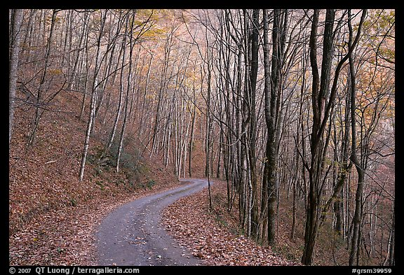Fall Road Wallpaper Picture Photo Unpaved Road In Fall Forest Balsam