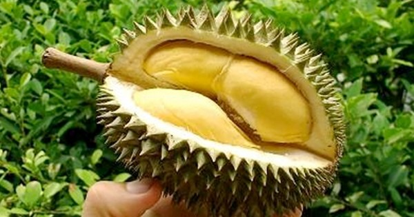 Durian_Film_by_Les_Blank